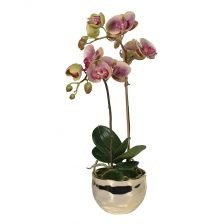 dusty pink orchid in gold pot