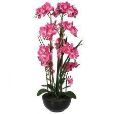 PINK ORCHID IN A BLACK POT