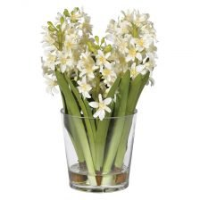 WHITE HYACINTH IN A GLASS VASE