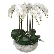 WHITE ORCHID IN STONE COLOUR BOWL